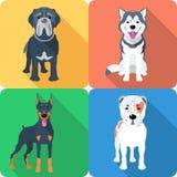 Set 9 dog icon flat design Royalty Free Stock Photo