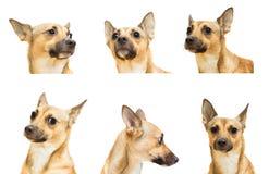 Set  a dog's head Royalty Free Stock Photo
