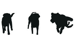 Set of dog silhouettes Royalty Free Stock Images