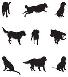 Set of dog silhouettes Stock Image