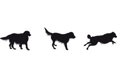 Set of dog silhouettes Stock Photos