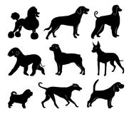 Set of dog silhouettes. vector illustration. Set of black silhouettes of dogs of different breeds. vector illustration vector illustration