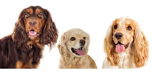 Set of dogs of Royalty Free Stock Photography