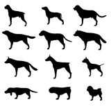 Set of dogs breeds silhouette. Vector  on white background.  Icons collection for cynology, pet clinic and shop. Royalty Free Stock Image