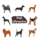 A set of dogs of different breeds. Dogs breed set. Doberman, Great Dane, Dalmatian Greyhound Pug Bulldog Royalty Free Stock Photo