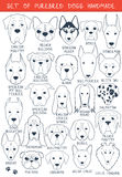 Set of 24 dogs different breeds handmade. Head dog Stock Image