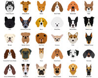 Set of dogs Royalty Free Stock Photos