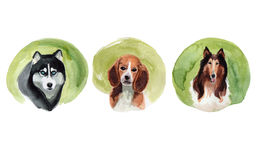 Set of dogs drawn by watercolor. Stock Image