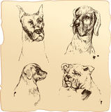 Set of Dogs heads - dalmatian, bloodhound, bulldog hand drawn il Royalty Free Stock Photography