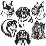 Set with dogs heads Royalty Free Stock Photos