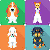 Set dogs icon flat design Royalty Free Stock Image