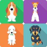 Set dogs icon flat design. Set dogs sitting icon flat design (Fox Terrier, Bedlington Terrier, Basset Hound, Dachshund Royalty Free Stock Image