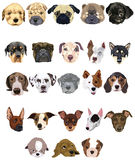 Set of dogs. Illustration of isolated set of dogs face on white royalty free illustration