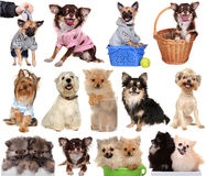 Set dogs isolated white background. Royalty Free Stock Photo