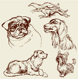 Set of Dogs - Labrador retriever, hound, pug, setter, lap-dog -. Hand drawn illustration -sketch in vintage style stock illustration