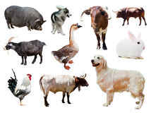 Set of dogs and other farm animals over white Stock Photography