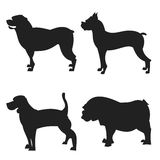 Set of dogs silhouette Royalty Free Stock Images