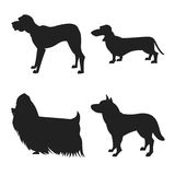 Set of dogs silhouette. The square picture small group of black shadows of four thoroughbred dogs on the white background Royalty Free Stock Image