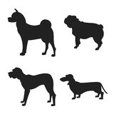 Set of dogs silhouette. The square picture small group of black shadows of four thoroughbred dogs on the white background Royalty Free Stock Photo