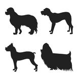 Set of dogs silhouette. The square picture small group of black shadows of four thoroughbred dogs on the white background Royalty Free Stock Images