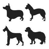 Set of dogs silhouette Stock Photos