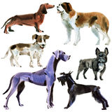 Set of dogs. Watercolor illustration in white background. Stock Photos