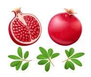 Set Dojrzały soczysty granatowiec Owoc z zielonymi liśćmi royalty ilustracja