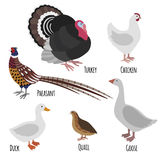 Set of domestic fowl, poultry farm cartoon birds Stock Image