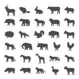 Set of domestic and wild animals on a white background. Royalty Free Stock Images