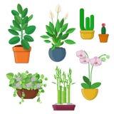 Set domowa roślina i kwiaty w garnkach ilustracji