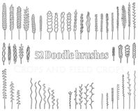 Set of Doodle brushes in the form of spikelets and grass and twi. Set of 52 black Doodle contour brushes in the form of spikelets and grass and twigs and other Stock Images