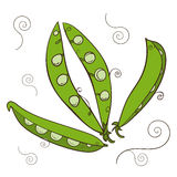 Set of Doodle green peas. On white background royalty free illustration