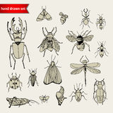 Set doodle insekty, nakreślenie Obraz Stock