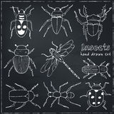 Set of doodle sketch Bugs and beetles Royalty Free Stock Photo
