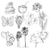 Set of doodle sketch Strelitzia, plumeria, lotus, elephant, palm, coconut, cactus, butterflies and seashells. vector Stock Image