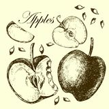 Set of drawing apples.  Illustrations. Royalty Free Stock Images