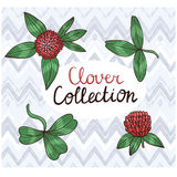 Set of drawing clover leaves and flowers. Hand drawn  illustration Stock Image