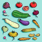 Set of drawing vegetables Stock Photo