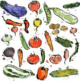 Set of drawing vegetables Stock Image