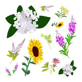 Set of drawing wild flowers. Herbs and leaves, painted field plants, botanical illustration in flat style, colored floral collection, hand drawn vector image Royalty Free Stock Photos