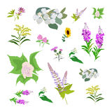Set of drawing wild flowers Stock Image