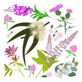 Set of drawing wild flowers Stock Images