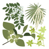 Set of drawing wild flowers. Herbs and leaves, painted field plants, botanical illustration in flat style, colored floral collection, hand drawn vector image Stock Photo