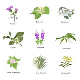 Set of drawing wild flowers, Stock Image