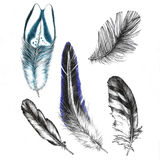 Set of drawings feathers Stock Image