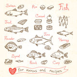 Set drawings of fish for design menus, recipes and packing. Trout, herring, sprat, flounder, perch, carp, tuna, salmon roe canned fish Vector illustration Royalty Free Stock Photography