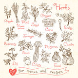 Set drawings of herbs for design menus, recipes Stock Photography