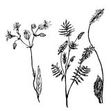 Set of  drawings meadow grass sketch  illustration Royalty Free Stock Photography