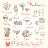 Set drawings of mushrooms for design menus Royalty Free Stock Photos