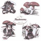 Set of drawings mushrooms Royalty Free Stock Image